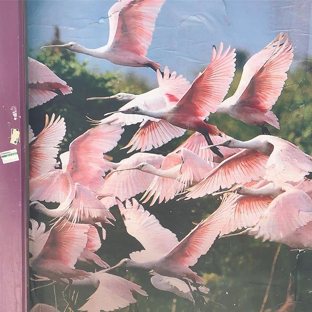 🌷 . . . . #fly #pink #birdsfree #freedom #city #poster #formosa #argentina #inspo #photooftheday #pictureoftheday #pinkbirds #monday #colours #nirvana