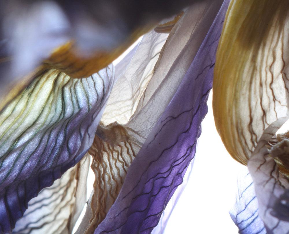 iris curtains-web.jpg