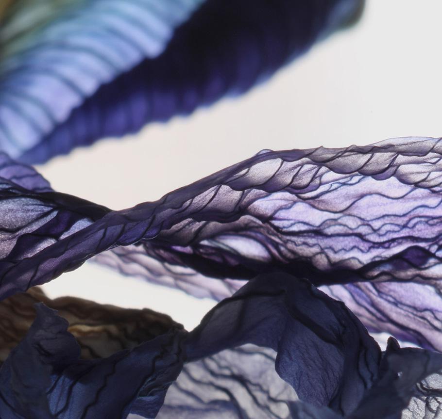 iris petal square-web.jpg