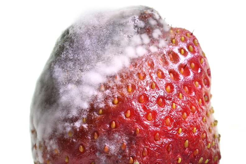 strawberry partial mold.jpg