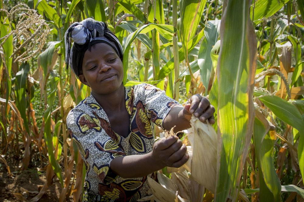 Malawi_Irrigation (4).jpg