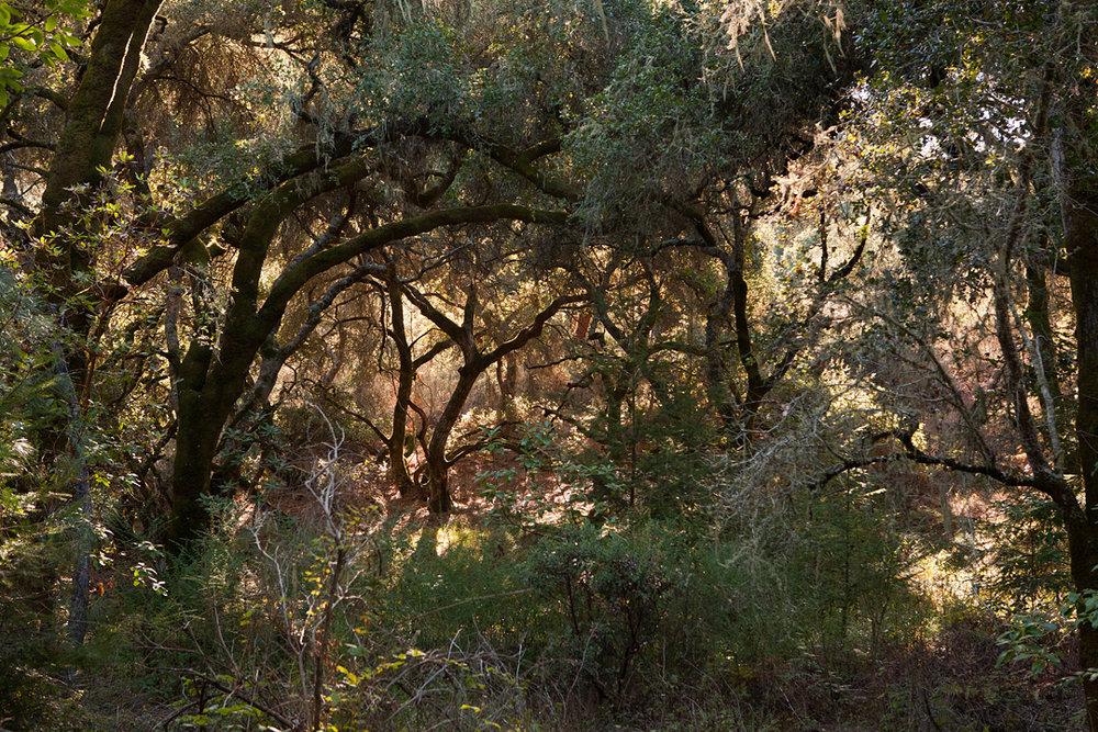 CareyKirkella_fengshui_nurture_woods_071_zf.jpg