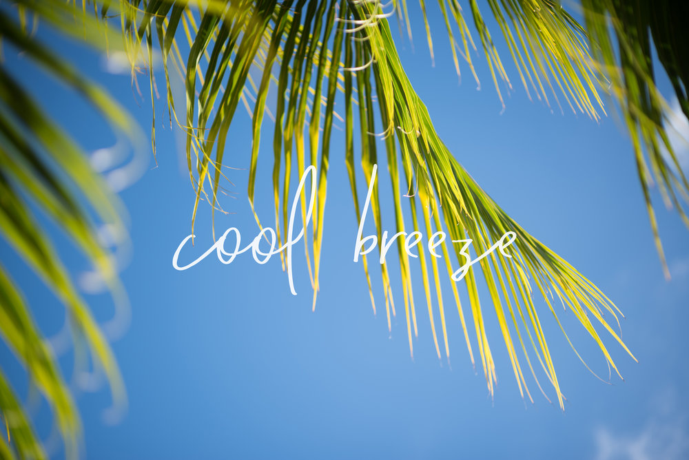 coolbreeze.jpg