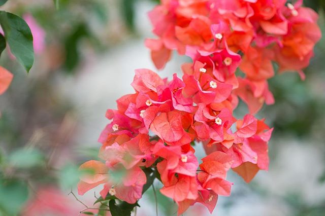 a new week : as much as my to do list grows on a monday morning and i want to conquer the world in the next week, i have to remind myself, all that needs to get done, will get done.  take it one step at a time and be kind, with yourself + others xo  #islandinspired #slowdown #bekind #tropical #bougainvillea #flora