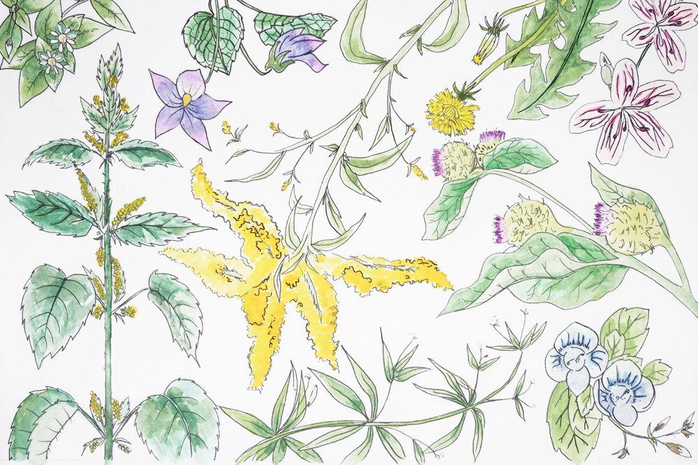 springcrop.jpg