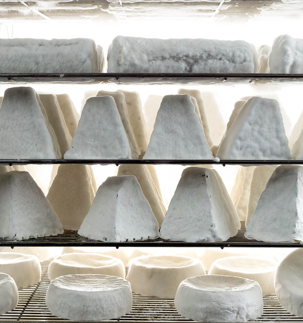 Shai Seltzer's Har Eitan Farm goat cheeses. Photo by and © Vision Studio