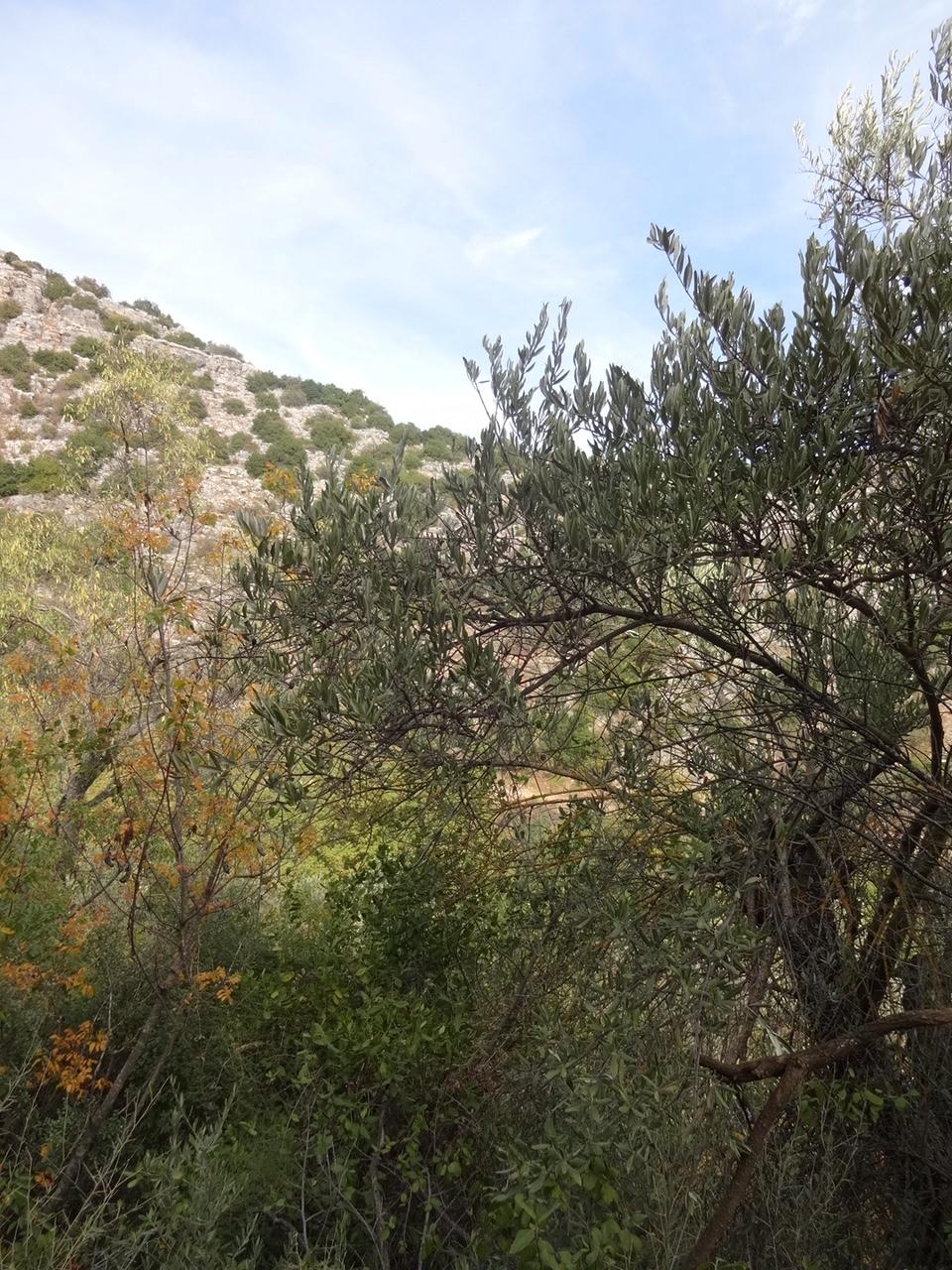 Walking the Amud Reserve, looking toward Tsfat