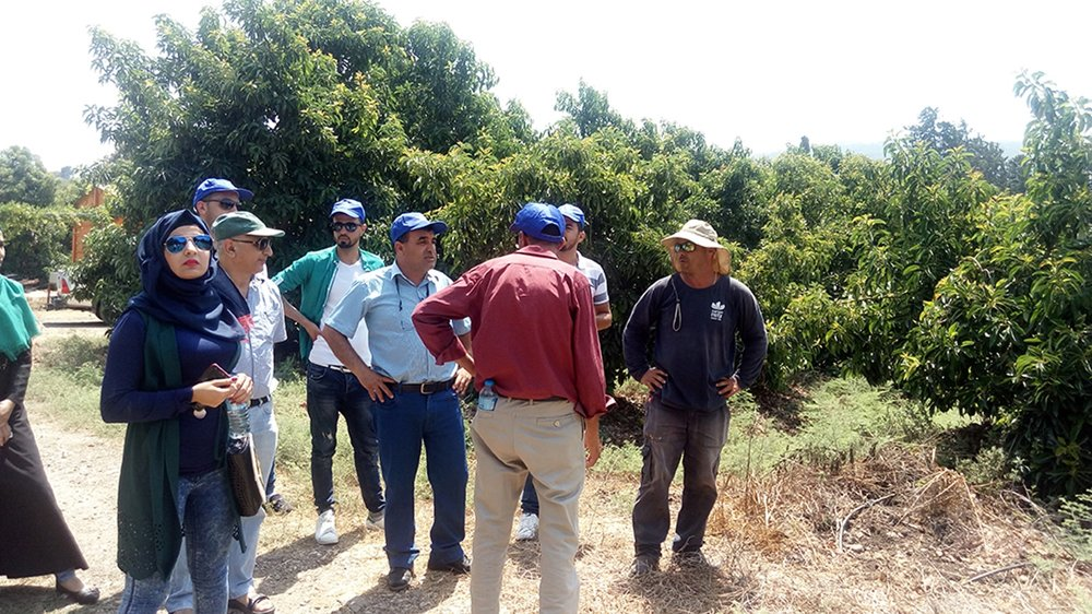 Students in the GIMI course for Palestinian avocado growers touring the fields.