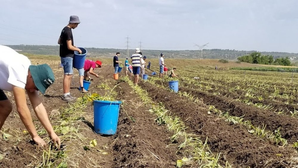 Leket's new Binyamina field grows produce only for the needy. Photo: courtesy ISRAEL21c