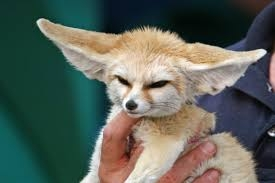 I'm gonna be honest. I have no idea what this thing is. It's maybe possessed. But its ears are cute, right?