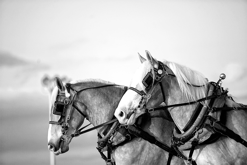 591_CO-NRVFair-140722-7207-bw.jpg