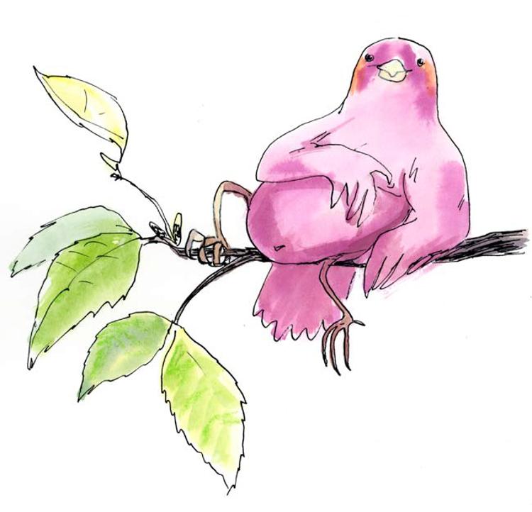 Sexy Bird