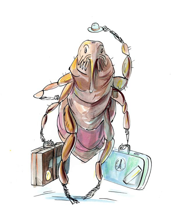 The Amazing Travelling, Disease-Spreading Mr. Flea <br> Reader's Digest