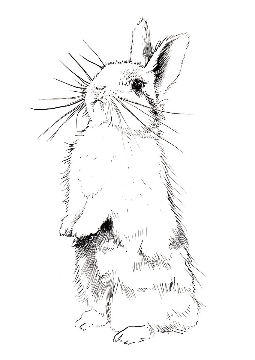 Bunny <br> Seasons Magazine