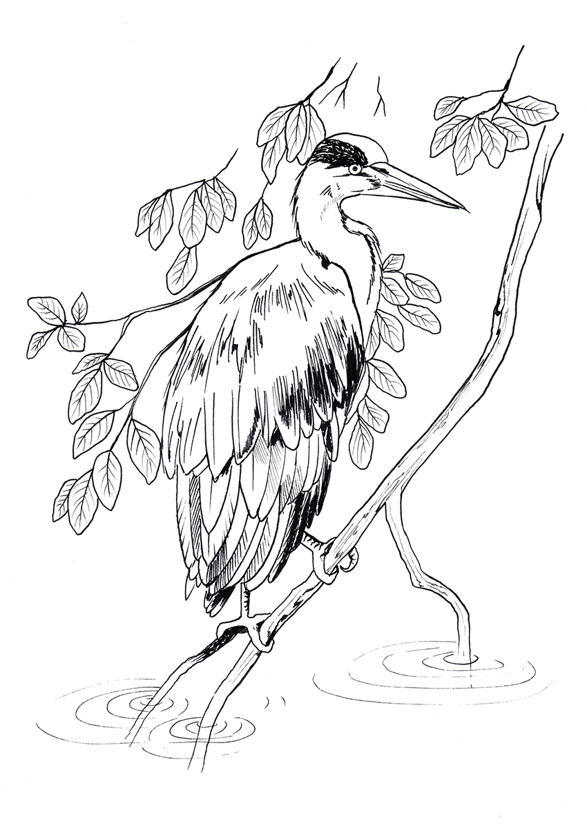 Heron <br> Seasons Magazine