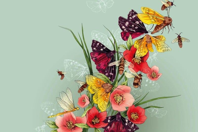 Biodiversity <br> New Scientist