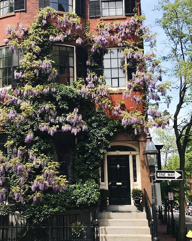 Beacon Hill in all of its glory. #spring