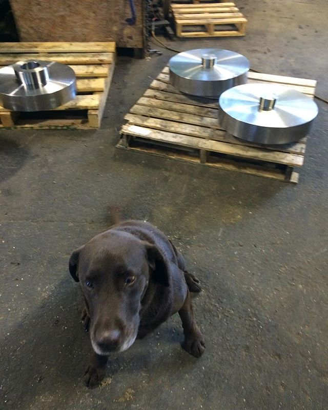 Our working guard dog gilly! Very protective over new parts #jrmmachine