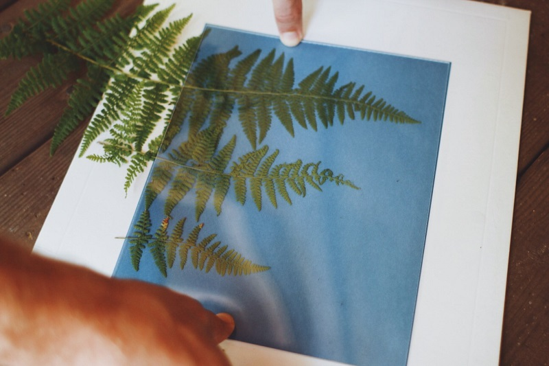 Step 2: Arrange your objects over the paper in a dark-ish place and use the acrylic sheet that comes with pack to hold them in place. Then, carefully set the paper in direct sunlight.