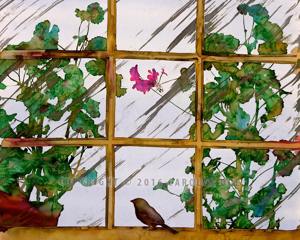 Little Bird in the Window