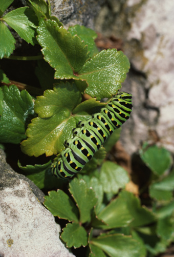 Ah, what havoc one new thought can wreak, even in the life of an humble caterpillar!