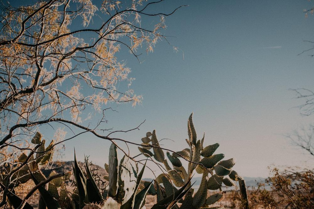 joshuatree-1.jpg
