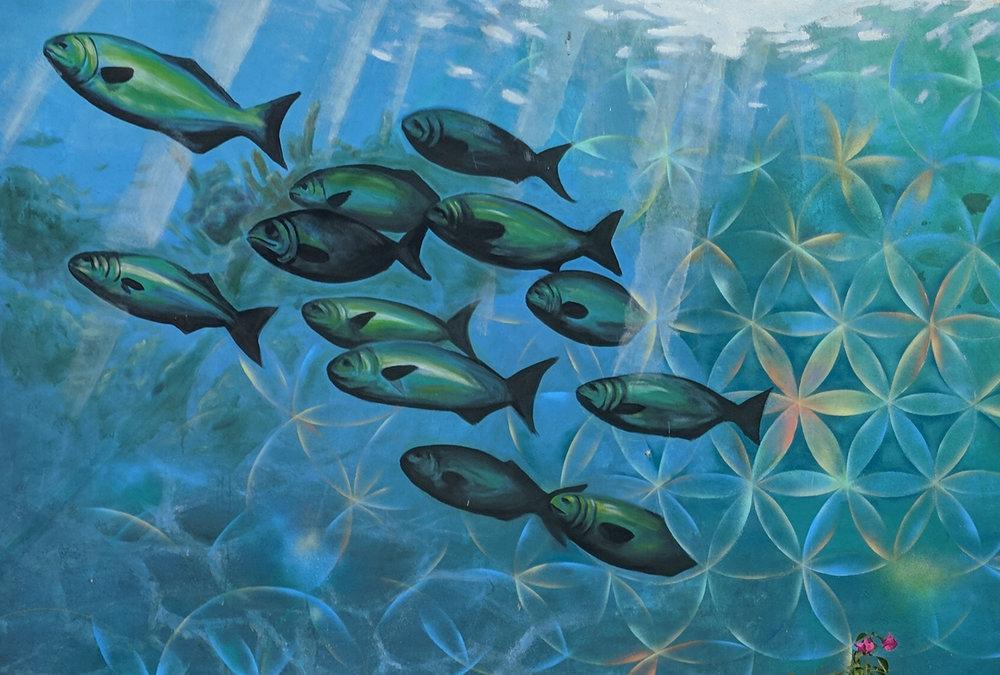 Reefoflife_fish.jpg