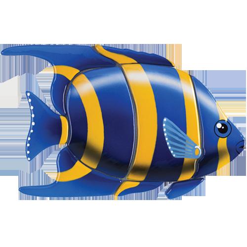 Angelfish (Blue)