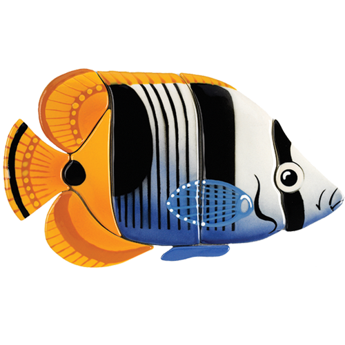 Saddle Butterfly Fish