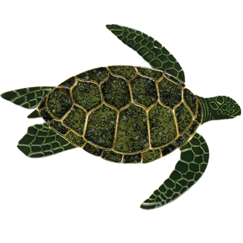 Turtle Side View