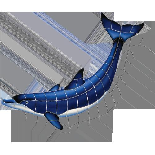 Blue Dolphin B w/sh