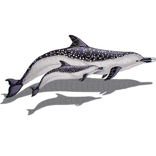 Spotted Dolphin with Baby w/sh