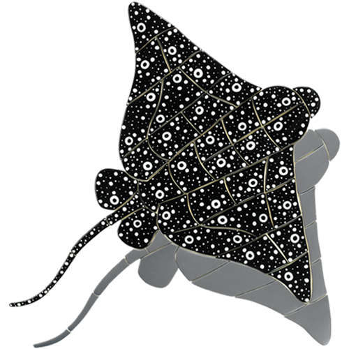 Spotted Eagle Ray w/sh