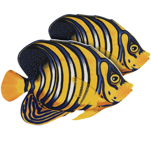Regal Angelfish Double