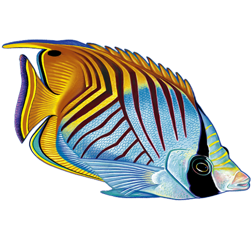 Threadfin Butterfly Fish