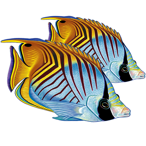 Threadfin Butterfly Fish Double