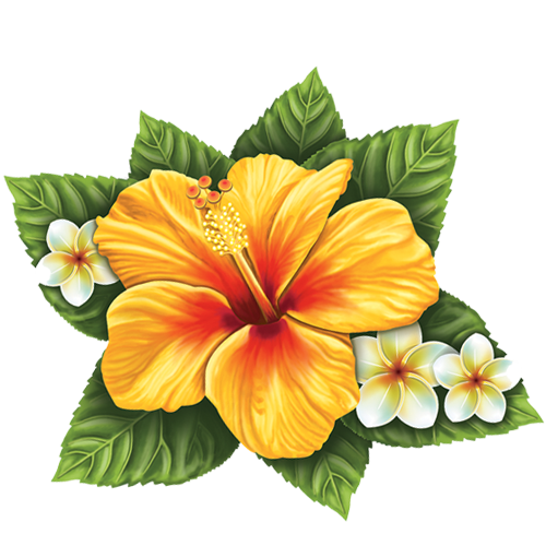 Hibiscus Flower (Single)