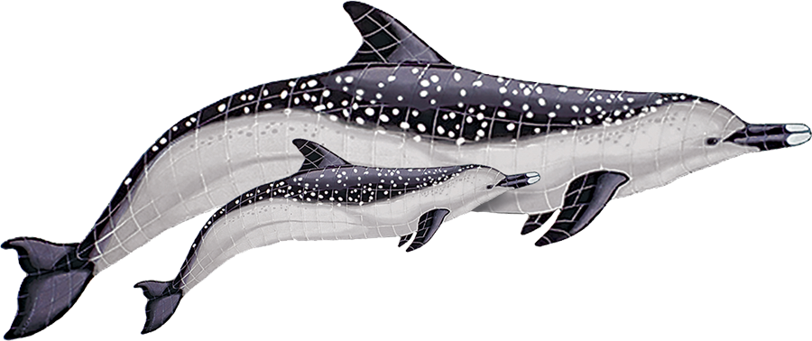 SD4D  Spotted Dolphin with Baby copy.png