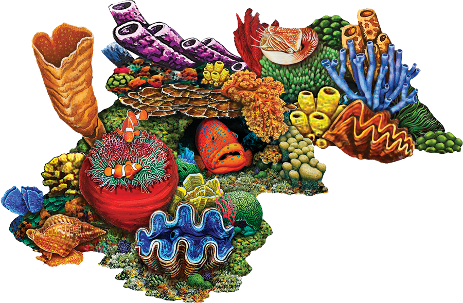 PORC-CR30C  Coral Reef-C copy.png