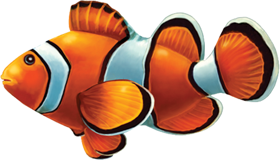 PORC-CL58  Clown Fish copy.png
