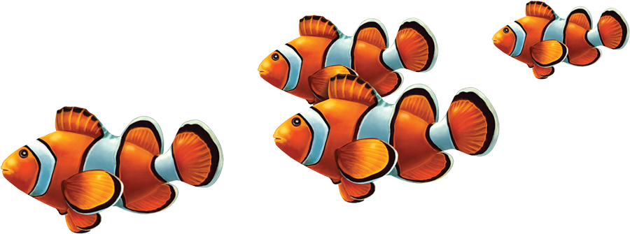PORC-CL58 Clown Fish Group copy.png