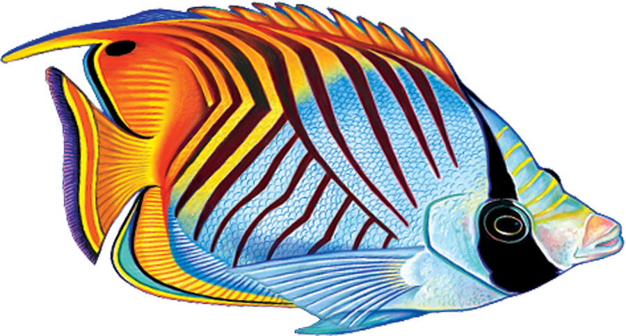 PORC-TF25  Threadfin Butterflyfish copy.png