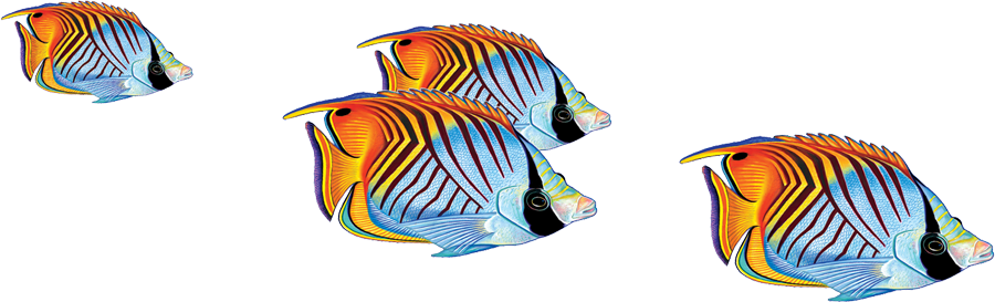 PORC-TF25  Threadfin Butterflyfish Group copy.png