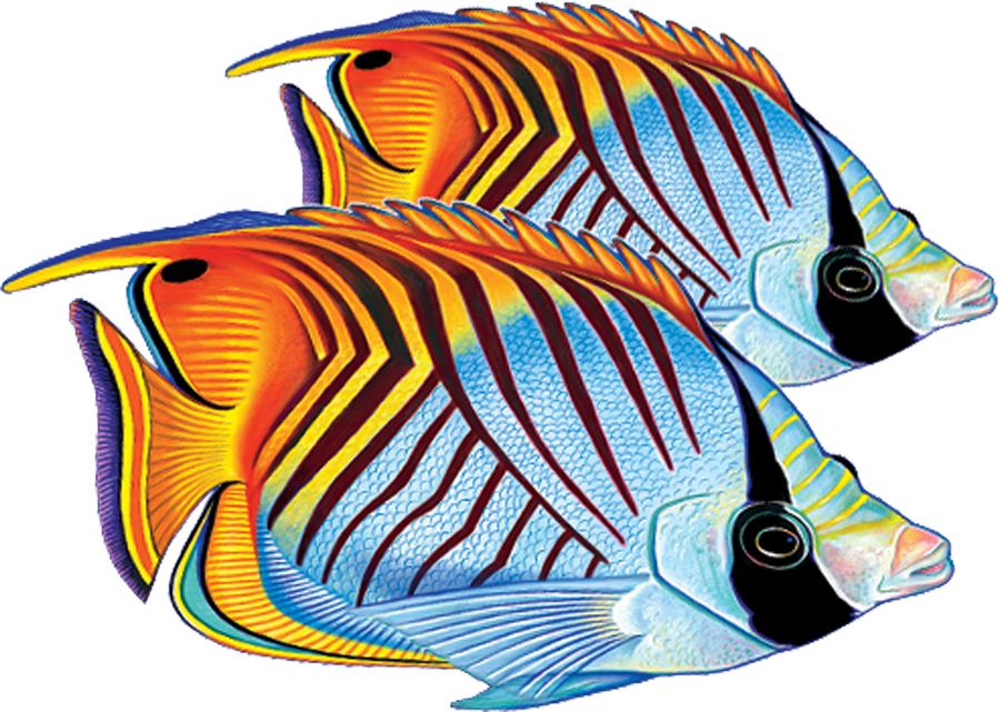 PORC-TF25D  Threadfin Butterflyfish (double) copy.png