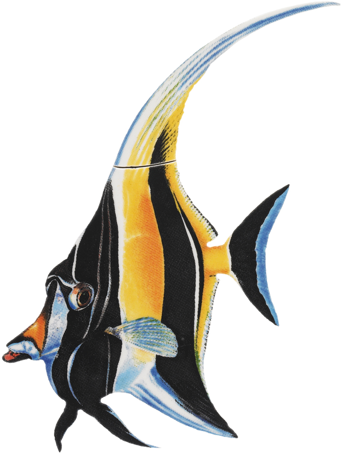 PORC-MF7  Moorish Idol copy.png