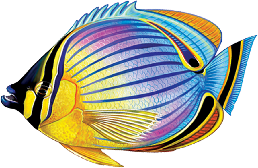 PORC-RF24  Redfin Butterflyfish copy.png