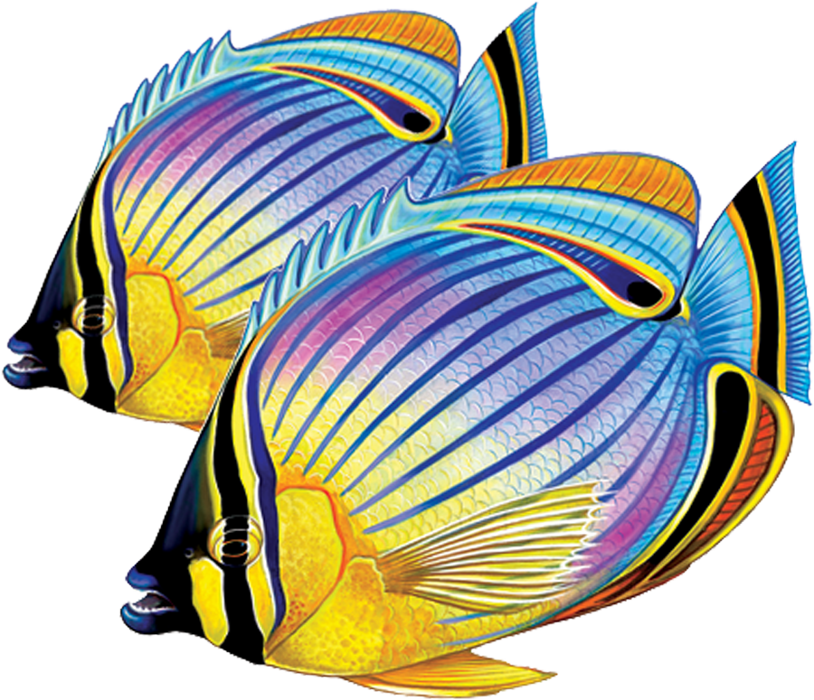 PORC-RF24D  Redfin Butterflyfish (double) copy.png