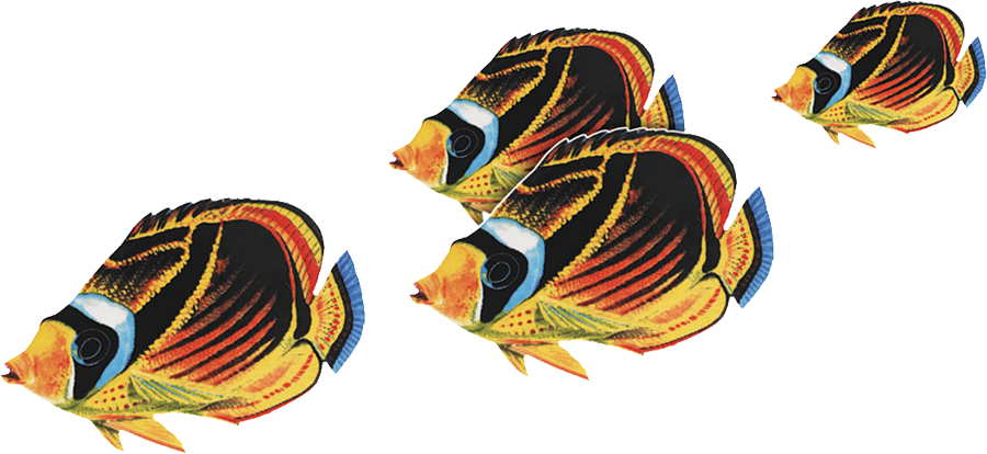 PORC-BF23  Raccoon Butterflyfish Group.png