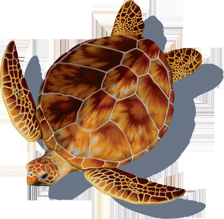 PORC-LT4-SH  Loggerhead Turtle (with shadow) copy.png