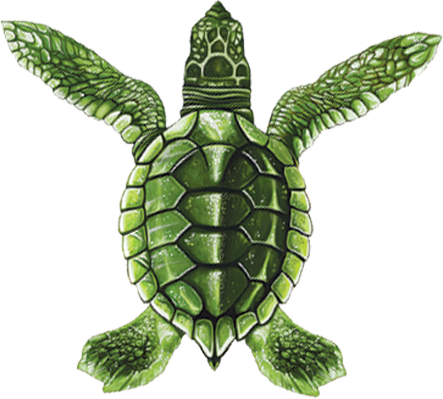 PORC-ST20A  Baby Turtle A (green) copy.png